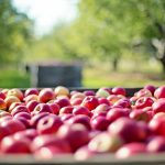 Gezonder dan appels