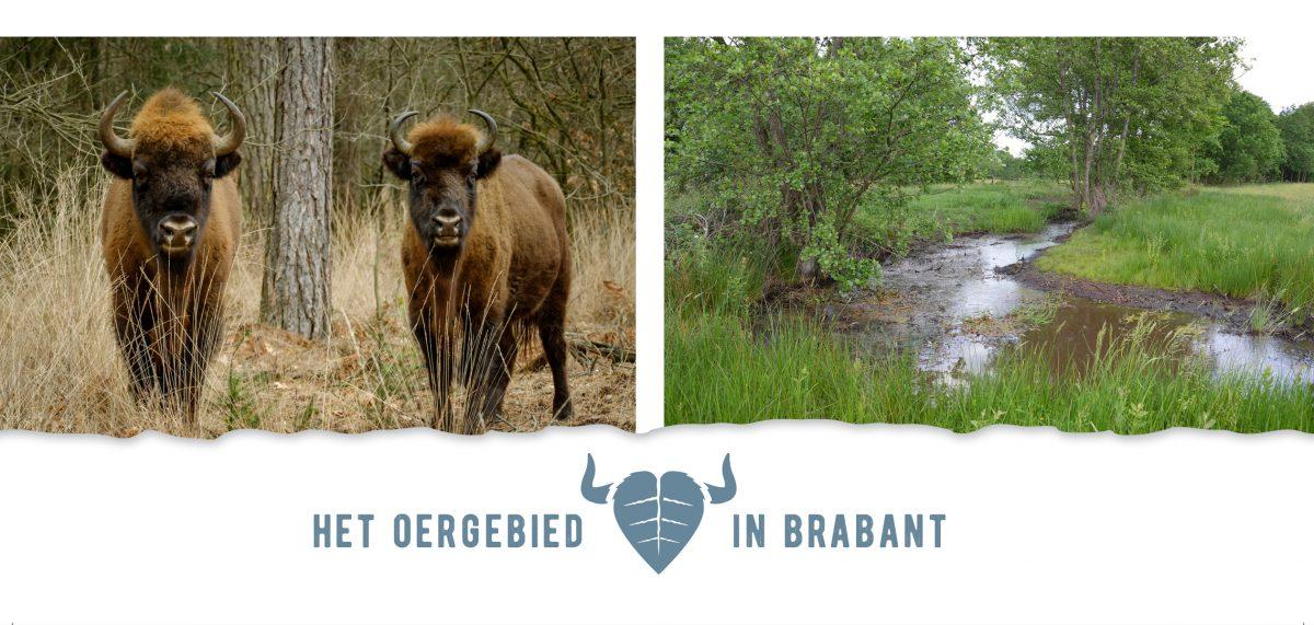 Bezoek de Maashorst www.meermaashorst.nl